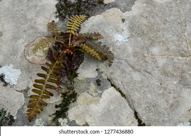 A fern plant with a tough life growing on on unlikely rock surviving and thriving against all odds surrounded by moss and lichen.