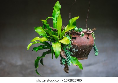 Fern in the pot - Shutterstock ID 1092825980