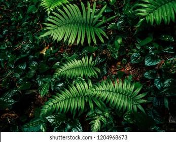 fern in rainforest