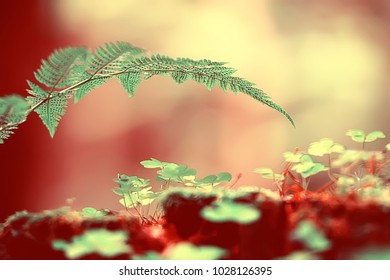 fern spring background / beautiful nature forest park leaves, design background fern wallpaper
