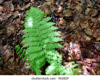 a fern in a spring forest