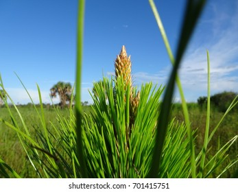 fern tree blooming in a wilderness against a blue sky