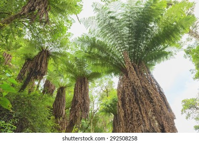 Fern tree in the tropical rainforest