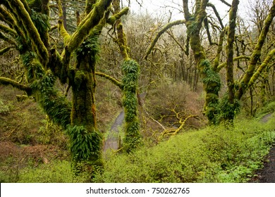 Fern Trees: Ferns are growing out of trees in the pacific northwest.