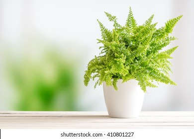 Fern in a white flowerpot on a wooden table