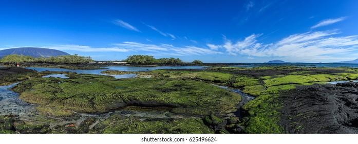 Fernandina landscape galapagos islands