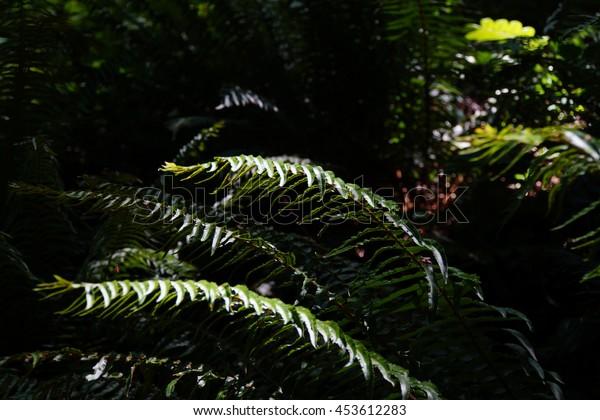 Ferns in deep shadow in forest in Boren Park, Seattle