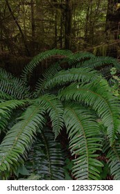 The ferns in the foreground spin around while a dark and creepy forest intertwines in the background.