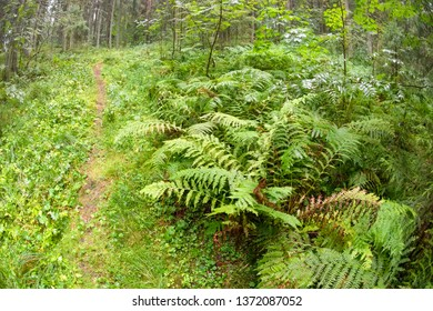 Ferns in the forest on a rainy day