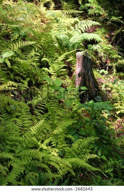 ferns found on washington island