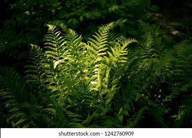 Ferns growing on the forest floor