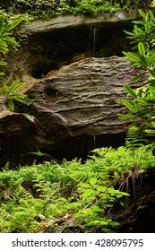Ferns Growing Under Rock Shelf - Shutterstock ID 428095795