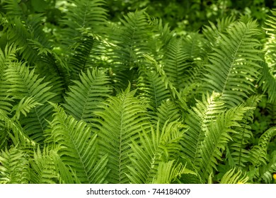 Ferns growing in the woods