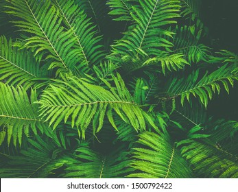 ferns leaves green foliage natural floral fern background