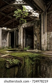 Ferns, moss and plants growing in abandoned factory