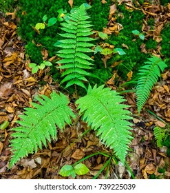 Ferns on dried leaves
