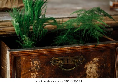 Ferns in open boxes of a vintage chest. old chest of drawers. aged furniture, design. Flower shop interior.