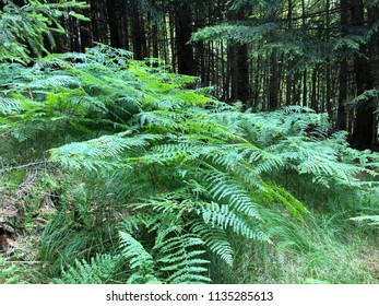 Ferny - Hiking up the the Buchberg - Attersee - Austria