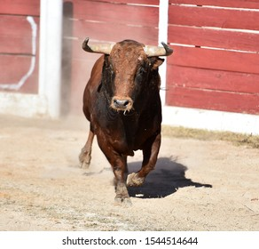 Ferocious bull in spain in arena