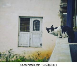 A ferocious cat looking for it's prey