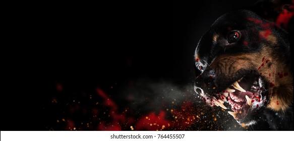 Ferocious Rottweiler barking mad on black background.