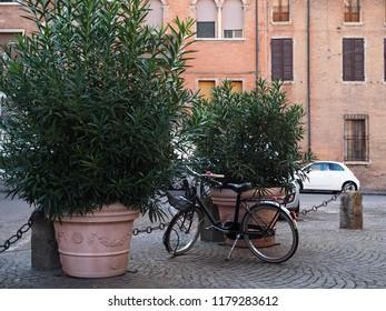 Ferrara, Italy. Churchyard of Santa Maria Nuova. A bicycle next to two evergreens.