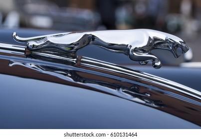 FERRARA / ITALY - MARCH 25, 2017: Hood ornament (Jaguar in the jump) on a vintage Jaguar car