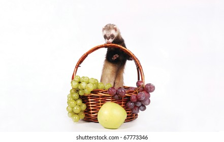 Ferret with a autumn crop. Green apple and grapes.