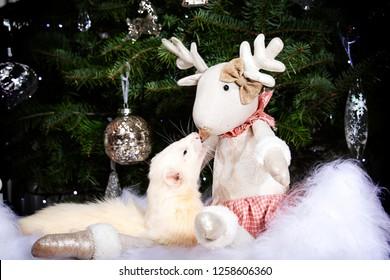 Christmas Ferret.Imagenes Fotos De Stock Y Vectores Sobre Christmas Ferret