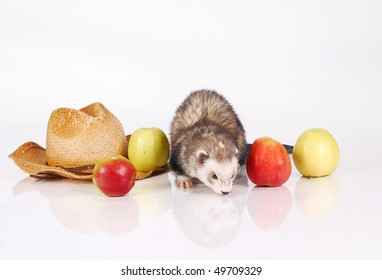 Ferret and crop of apples