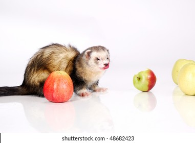 Ferret  tongue and apple