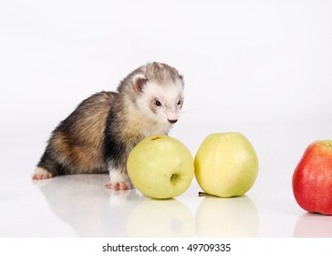 Ferret and yellow apples