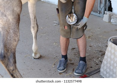 a ferrier changes a horse's iron and plants nails in the hoof