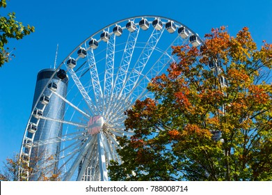 Ferris wheel in Atlanta sits behind a tree displaying beautiful fall foliage and shining under the autumn sun. Tower stands tall in the background.
