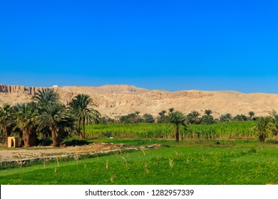 Fertile banks of the Nile. Valley of the Nile river. Palm trees and fields on Nile riverside in Egypt