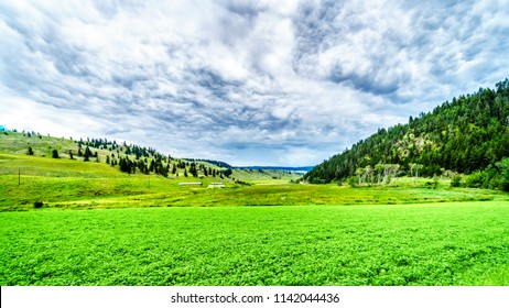 The fertile farmland among the rolling hills along Highway 5A between Kamloops and Merritt in the Okanagen region of British Columbia, Canada