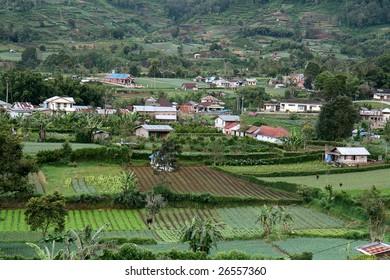 The fertile farmland on the highlands of Brastagi, North Sumatra in Indonesia.