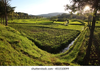 Fertile field at sunset in the countryside (Rwanda/ Africa)