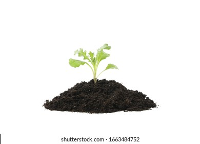 Fertile soil with green sprout isolated on white background