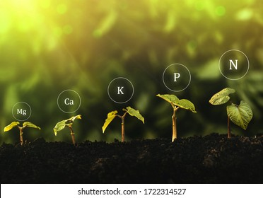 Fertilization and the role of nutrients in plant life with digital mineral nutrients icon