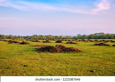 Fertilizer from cow manure and straw. Heap of manure, have been taken out on the field in early spring to fertilize fields