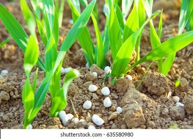 Fertilizer on a field