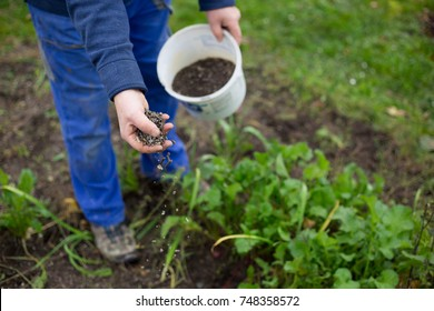 Fertilizing the garden by bio granular fertilizer for better conditions of garden