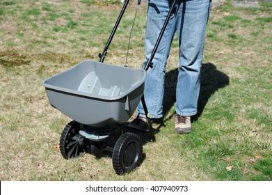 fertilizing the lawn by fertilizer spreader