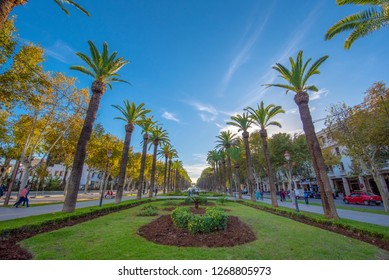 Fes, Morocco - 15 December, 2018: Panorama of Palm trees in Park ( Parc ). Main attraction and beautiful green garden in the center of the city Fez.