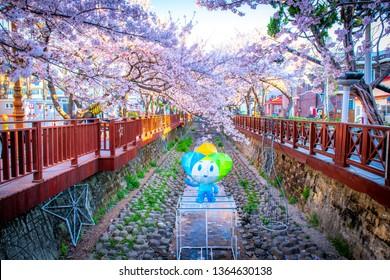 festival cherry blossoms at yeojwacheon stream in jinhae city south Korea: 1 April 2019