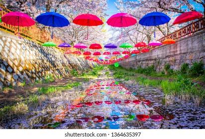 festival cherry blossoms at yeojwacheon stream in jinhae city south Korea
