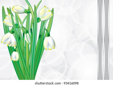 Festive card with blooming snowdrops. Raster version.