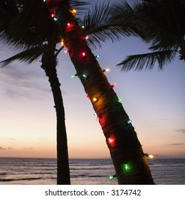Festive colored lights wrapped around trunk of palm tree at beach at sunset.