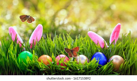 festive Easter card with rabbit ears sticking out of green grasses with painted eggs and small butterflies fly on a Sunny Sunday spring day - Shutterstock ID 1617153892